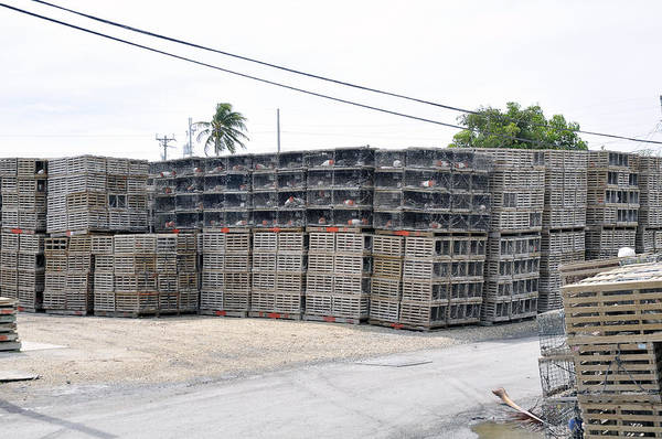 Photograph - Conch Key Lobster Traps Stacked 1 by Ginger Wakem
