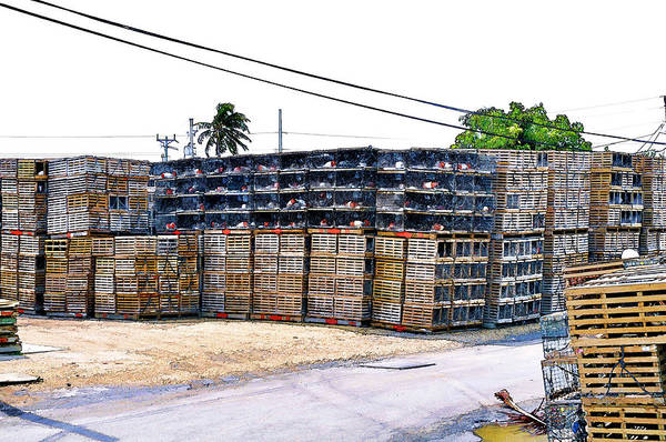 Photograph - Conch Key Lobster Traps Stacked 2 by Ginger Wakem