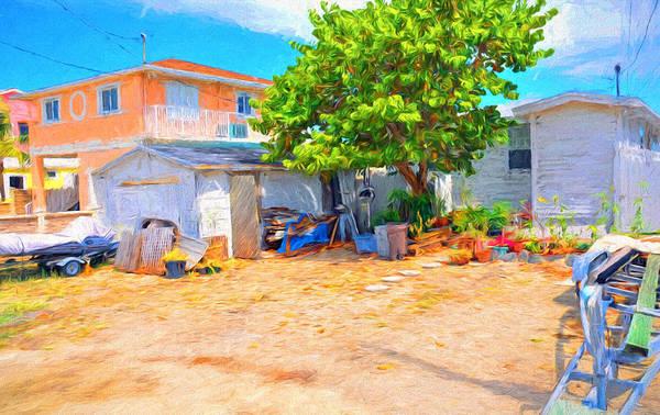 Photograph - Conch Key Sea Grape Tree 4 by Ginger Wakem
