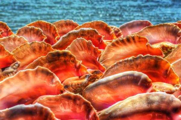 Photograph - Conch Parade by Jeremy Lavender Photography