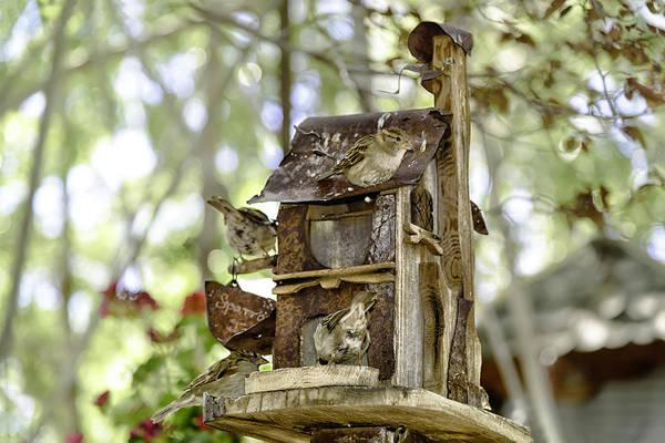 House Sparrow Photograph - Condo by Camille Lopez