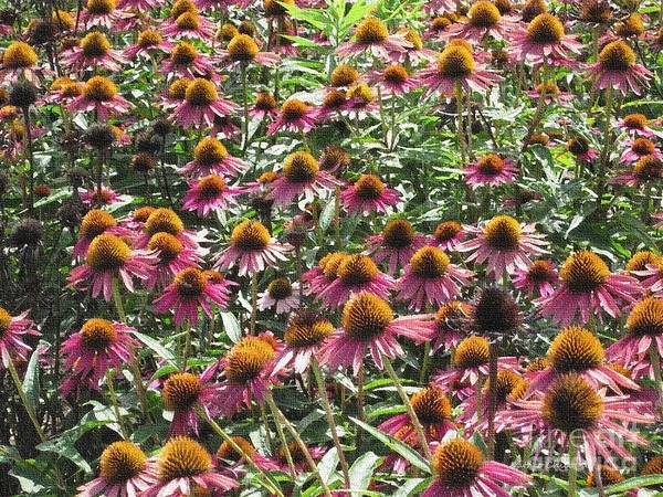Photograph - Cone Flowers by Kathie Chicoine