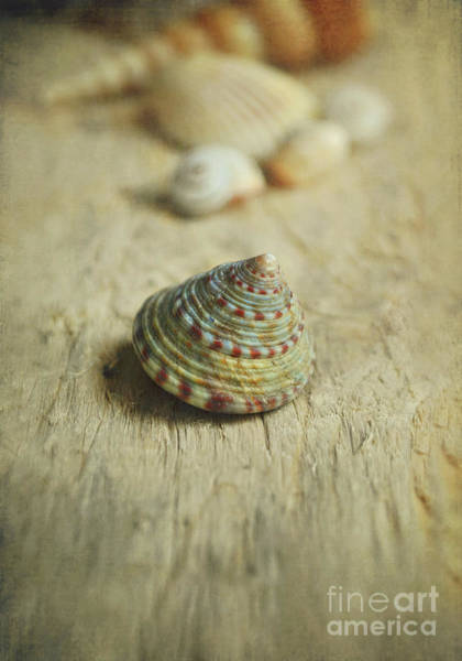 Wall Art - Photograph - Cone Shell by Lyn Randle