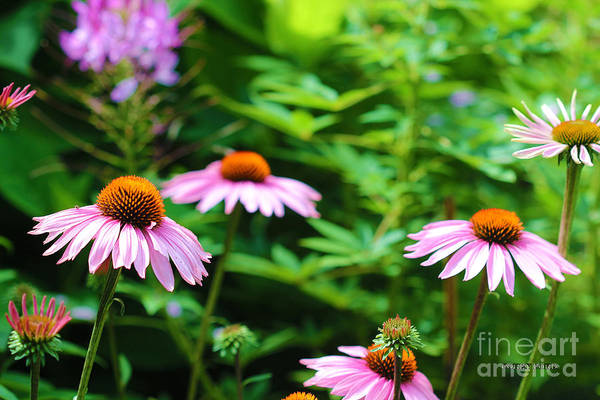 Pistil Painting - Coneflower by Corey Ford