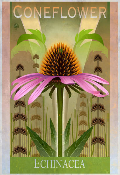Coneflower Painting - Coneflower Echinacea Floral Poster by Garth Glazier