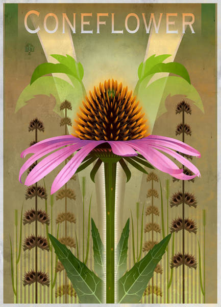 Coneflower Painting - Coneflower Echinacea Floral by Garth Glazier