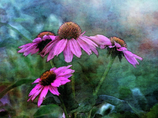 Photograph - Coneflower Family 3849 Idp_2 by Steven Ward