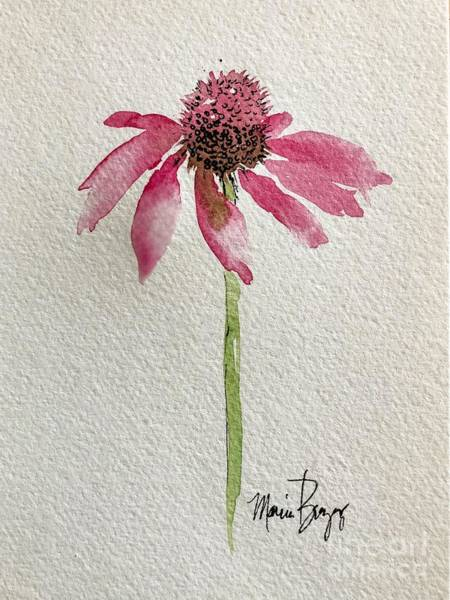 Painting - Coneflower by Marcia Breznay