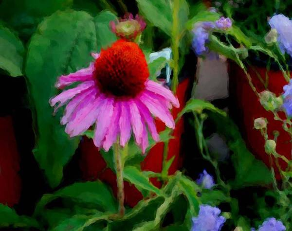 Painting - Coneflower by Michael Thomas