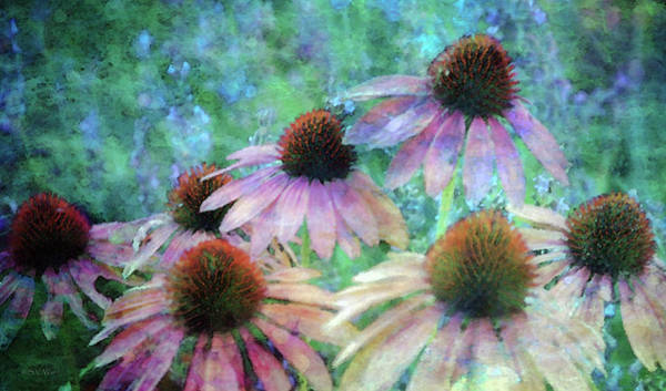 Photograph - Coneflowers Twirling In Lavender 1666 Idp_2 by Steven Ward