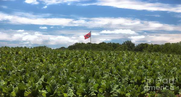 Southern Pride Wall Art - Photograph - Confederate Flag In Tobacco Field by Benanne Stiens