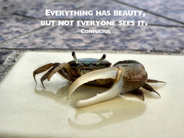 Photograph - Confucius Crab by Kathy K McClellan