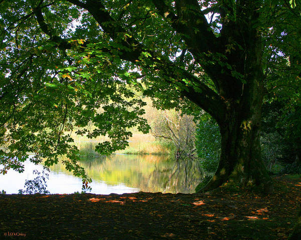 Photograph - Cong Park by Laurie McGinley