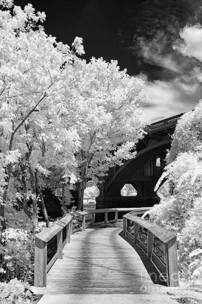 Photograph - Congaree River Boardwalk by Charles Hite