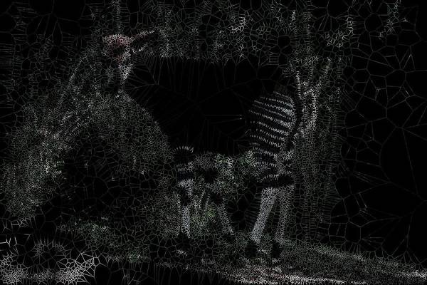 Digital Art - Congo Basin Forest Giraffe by Stephane Poirier
