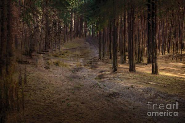 Wall Art - Photograph - Conifer Hill by Richard Thomas