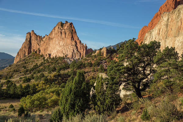El Paso County Photograph - Coniferous Trees In The Garden Of The Gods by Bridget Calip