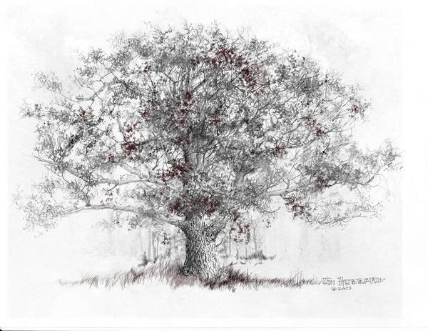 Wall Art - Drawing - Connecticut - White Oak by Jim Hubbard