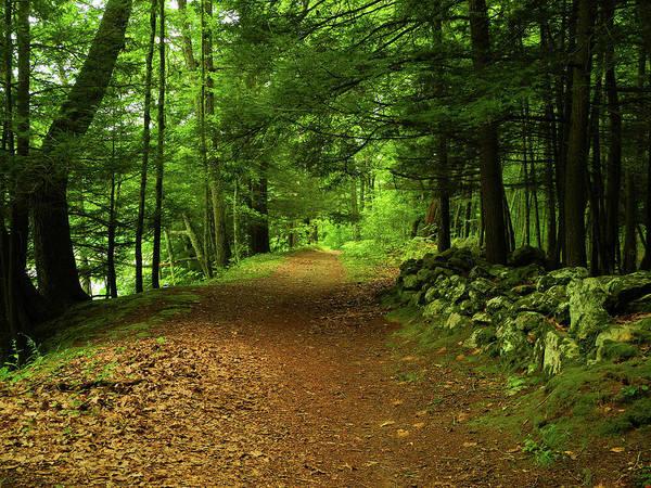 Photograph - Connecticut Appalachian Trail's Connecticut River Walk by Raymond Salani III