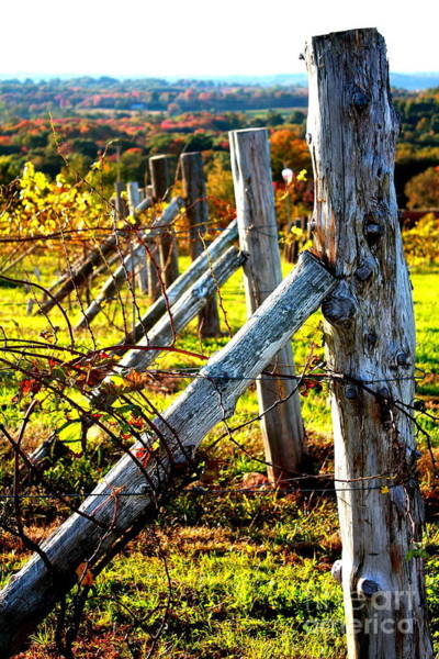 Connecticut Winery In Autumn Art Print