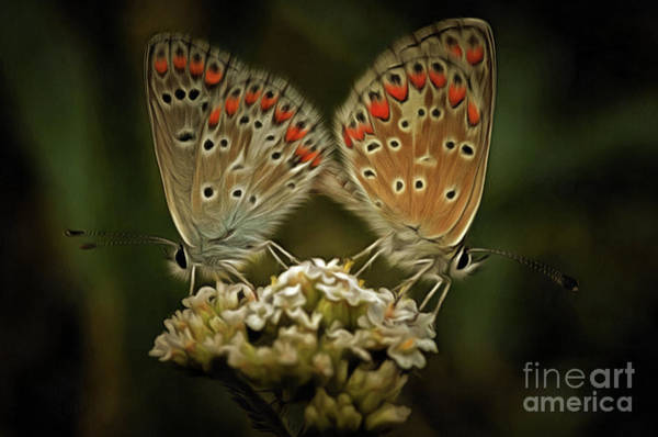 Wall Art - Photograph - Contact - Detail Of The Butterflies by Michal Boubin