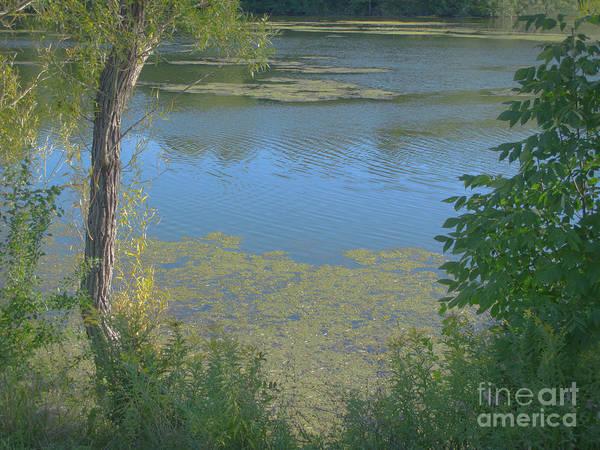 Livonia Photograph - Contemplating Summer by Ann Horn