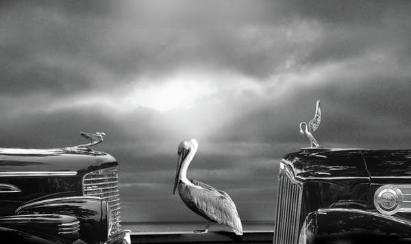 Hood Ornaments Digital Art - Contemplating The Pelican by Larry Butterworth