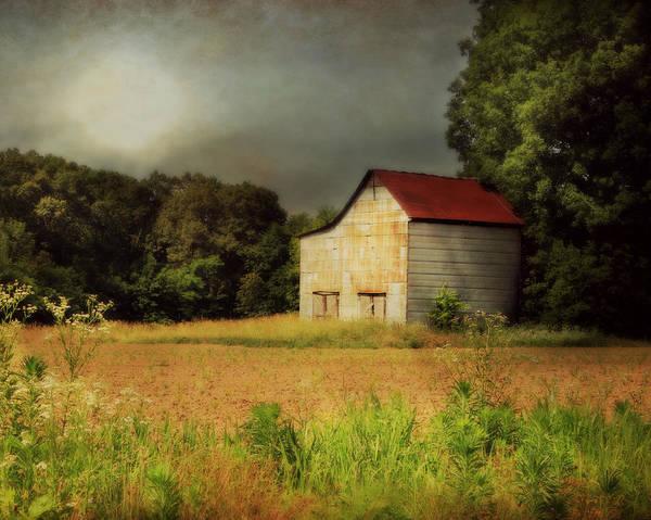 Photograph - Contemplation by Julie Hamilton