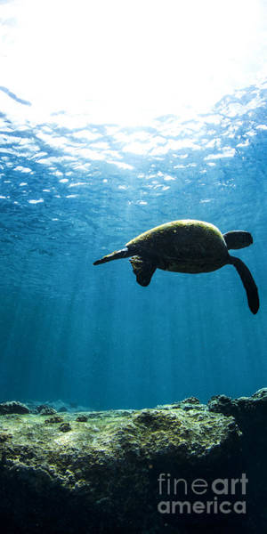 Turtle Photograph - Contemplation  - Triptych   Part 2 Of 3 by Sean Davey