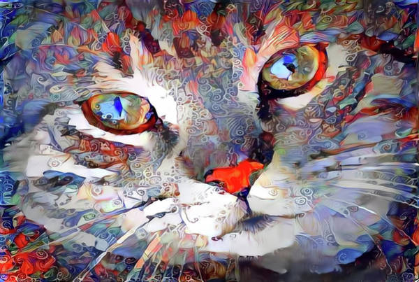 Digital Art - Content Kitty Cat by Peggy Collins