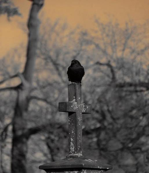 Wall Art - Photograph - Contented Graveyard Crow by Gothicrow Images