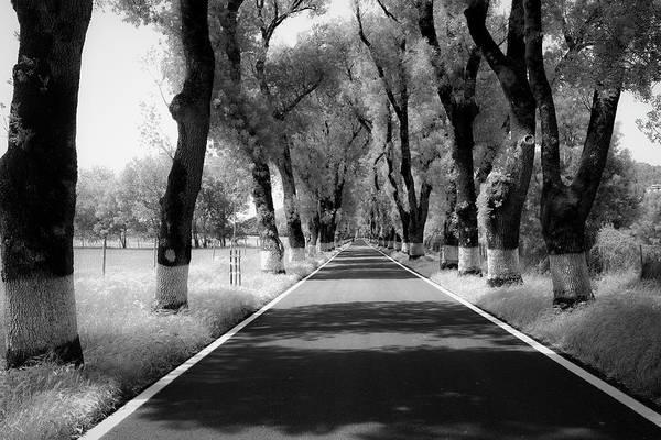Photograph - Continuous White by Edgar Laureano