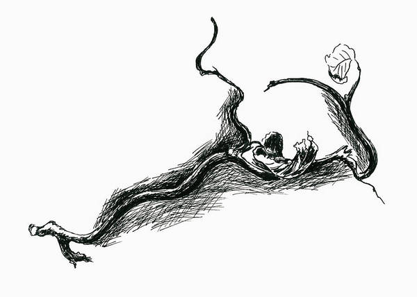 Drawing - Contorted Filbert Twig With Dry Leaves by MM Anderson