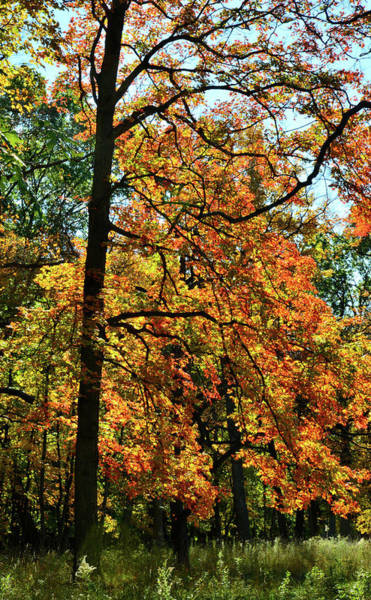 Photograph - Cook County Forest Preserve Fall Color by Ray Mathis
