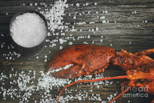 Photograph - Cooked Lobster Claw With Sea Salt On Wood by Sandra Cunningham