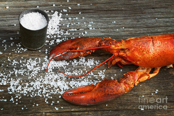 Photograph - Cooked Lobster With Coarse Salt On Wood by Sandra Cunningham