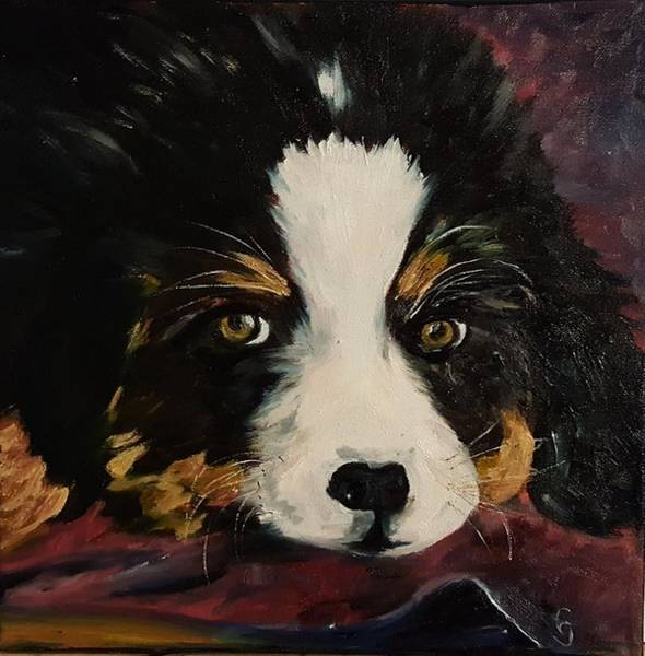 Painting - Cookie Bernese Mountain Dog    10 by Cheryl Nancy Ann Gordon