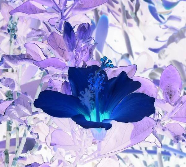 Cool Blue Hawaiian Hibiscus Art Print