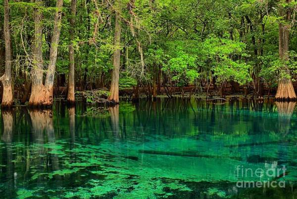 Photograph - Cool Blue Manatee Spring Waters by Adam Jewell
