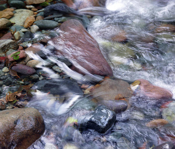 Photograph - Cool Clear Water #3 by Ben Upham III