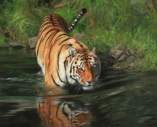 Bengal Tiger Painting - Cool by David Stribbling