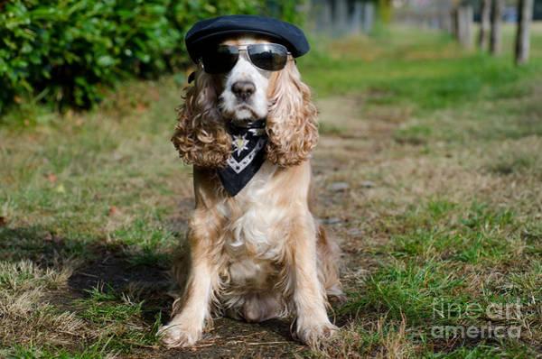 Big Dog Photograph - Cool Dog by Mats Silvan