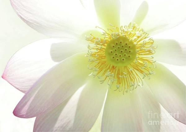 Photograph - Cool Lotus by Sabrina L Ryan