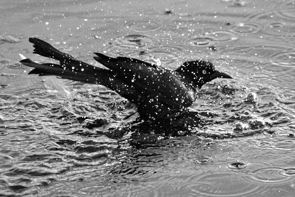 Photograph - Cooling Off by Cynthia Guinn