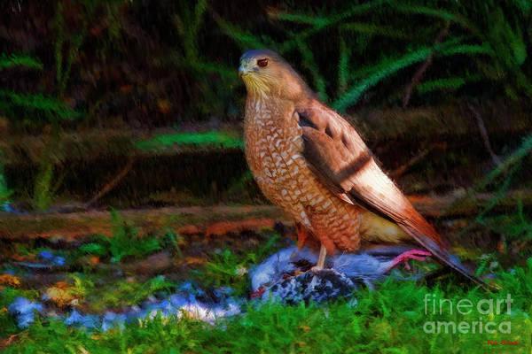 Photograph - Cooper's Hawk's Dinner by Blake Richards