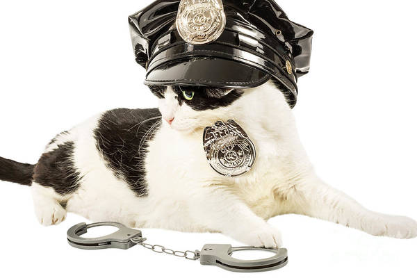 Photograph - Cop Police Cat by Benny Marty