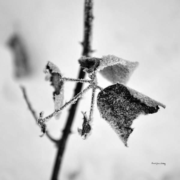 Photograph - Copiousness by Randi Grace Nilsberg