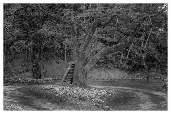 Photograph - Copo De Leite-2-mendes-rj by Carlos Mac