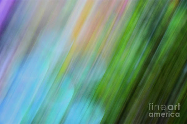 Photograph - Copper Rainbow by Cheryl McClure