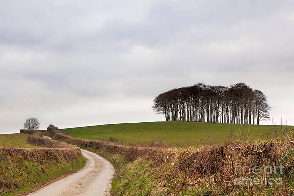 Wall Art - Photograph - Copse On The A30 by Richard Thomas
